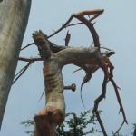 The Cedars of Lebanon - Forest of God