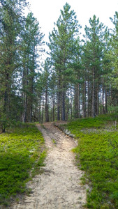 Start of Wintergreen Trail