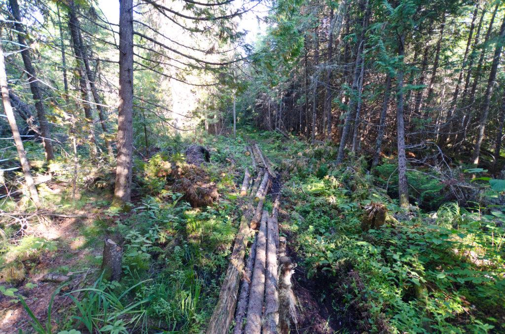 Fushimi Lake Hiking Trail